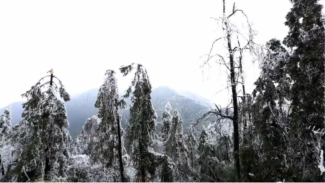 洪家山冬景